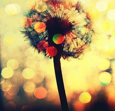 make a wish flower